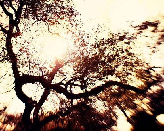 nature photography, tree photograph, sunbusrst, sunset wall art, neutral home decor, brown decor