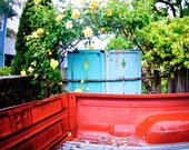 Truck Bed-  old ford and climbing roses.