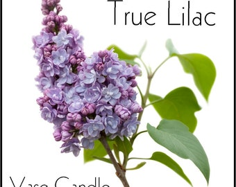 True Lilac Vase Candle 2.8 oz Wax Melts - Highly Scented, Hand Poured Fresh, Premium Paraffin Soy Blend Wax Tarts, 25 Hour, Color Free