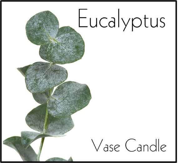 Eucalyptus Vase Candle Refill - Scented, Soy, Paraffin Wax, Paper Core, Self-trimming Wick, Refillable Vase, 50 Hour Burn Time Each