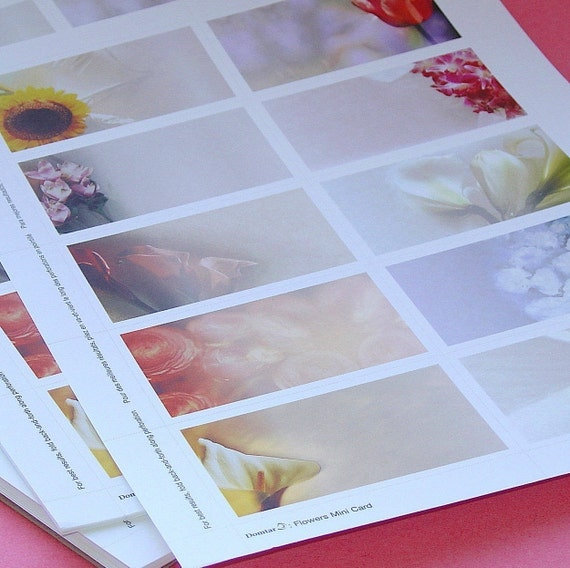 floral card sheets / printable business enclosures . LAST in stock
