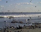 Seagulls (card)