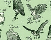 Owl Studies green edition woodland wildlife bird watching field study owl nature shabby chic large format full color art print
