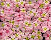 Prima Hydrangeas Scrapbooking Embellishments Fruit Punch