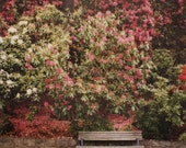 flowery bench polaroid print