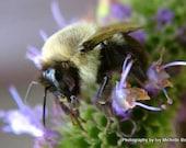 Bumble Bee on Flower Macro Photo Print