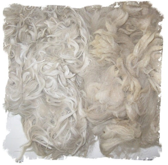 White Suri Alpaca and Huacaya Alpaca Fleece Sampler - For Spinning Felting and Doll Making - 8 ounces