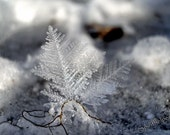 Ice crystal, Snow Flake, Delicate Beauty, Fine Art Winter Photograph, Winter Frost, Fairy Wings, Photograph or Greeting card