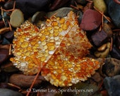 Golden Gems, Raindrop of Beauty, Raindrops on Autumn Leaf, Lakeside Find, Rare Event, Natural Leaf, Photograph or Greeting card