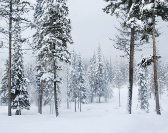 Winter Forest, Snowy Realm, Trees in a Snow Storm, landscapes of winter, Photograph or Greeting card