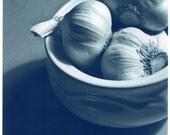 cyanotype garlic still life \/\/ 8x8 discount photograph.