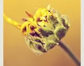 Fine Arts Photography Sunflower Macro 8x8  Handmade Certified