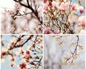Kansas Spring Photos Set 4 8x8 Prints