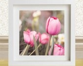 Fine Art Photography Flowers Tulip Garden 8x8