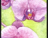 Orchid ACEO - LRutherford Original Miniature Watercolour 2
