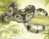 ACEO Snake - L Rutherford Original watercolor boa sfa