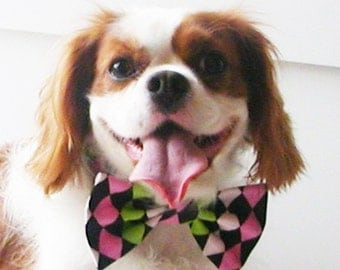 Dog Bow Tie Harlequin: Dog or Cat green pink black white all sizes dog clothes dog neckwear