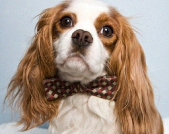 Bow Tie: Dog or Cat Argyle all Sizes