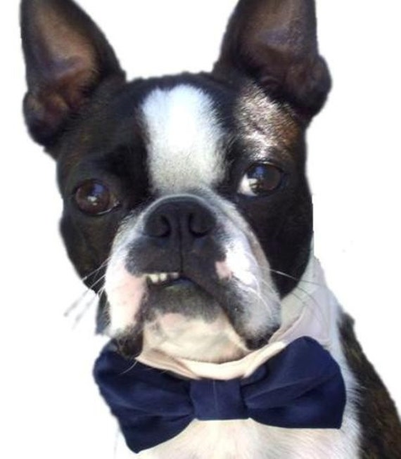 Dog Bow Tie Collar: For Your Wedding To Include Your Awesome Pup or Kitty
