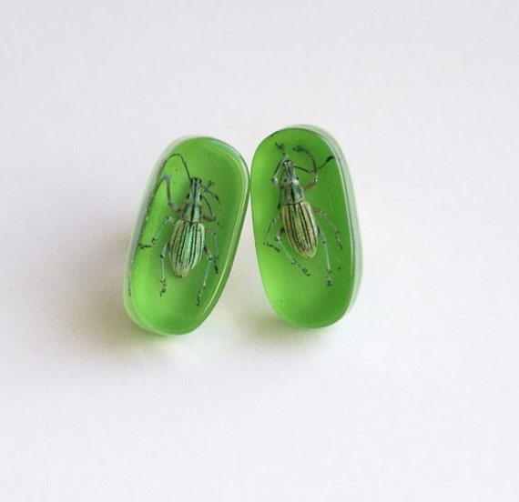 Green lucite cufflinks with real bugs