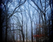 the forest cathedral - blue fog mist canopy fairytale woods - contemporary decorative print