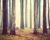 Woods - Fairytale Photography - Forest Photos - Muted, Soft, Zen - Nature Photographs - Landscape