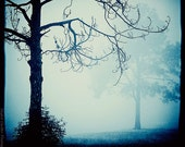 burtonesque - haunting tree photography - foggy landscape - fantasy print - decorative photo print 8x8