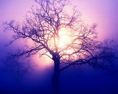 Rising - ethereal photography - sunrise - tree - morning photo - optimistic - purple - home decor - 8x8