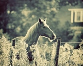 Horse in Morning Light, Animal Photography, Sunlit Landscape, Nature Photography, Blue, Rural, Gift Idea for Horse Lover, Equestrian Decor