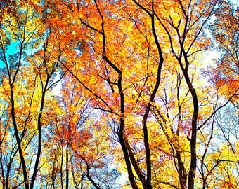 Fall Photography, Autumn Landscape, Orange Gold Blue, Vibrant Colors, Autumnal Photo, Colorful Fall Decor, Foliage, Energizing Photography