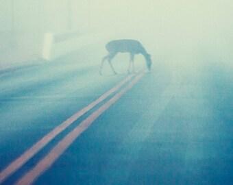 Deer on the Road on a Foggy Morning, Texas Wildlife Photography, Animal, Pastel Decor, Blue Decor, Animal Photography, Zen Art, Peaceful