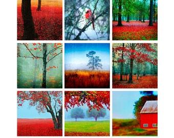 Passionate Earth set - nine prints - decorative photography, nature, landscape, fine art, tree photos