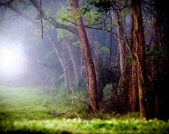 Enchanted Forest Photography -  Foggy Fairytale Woods  - Rabbit Hole - Fog Mist Woodland - Decorative Wall Art