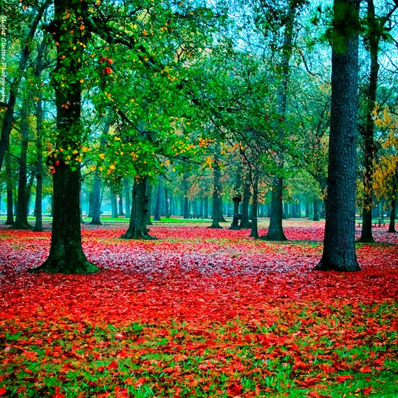 Colorful Landscape Photography, Fairytale Decor, Red and Green Print, Autumn, Fall Foliage, Foggy Landscape Photo, Woods, Trees, Forest