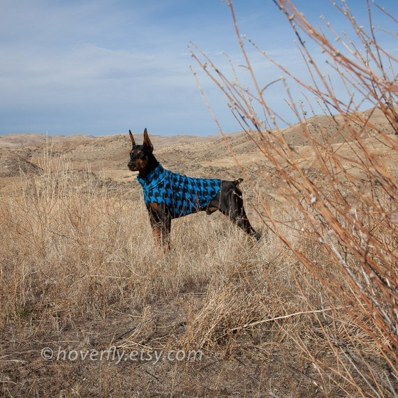 Dog Sweater in Blue and Black Argyle