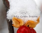 Bittersweet in Snow Photo Notecard