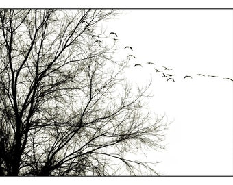 tree photography, fine art black and white photography, nature, woodland photograph