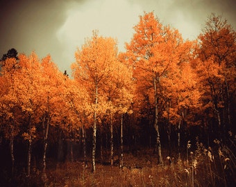 Landscape photography - fine art nature photography - woodland landscape photograph - Colorado trees home decor