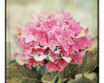 shabby chic, photograph, fine art flower photography - hydrangea, floral, nature, dreamy, cottage, home decor