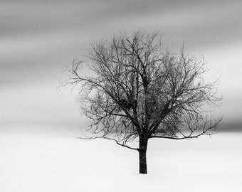 photograph - tree photograph - landscape photography - winter snow wall decor woodland nature fine art photograph