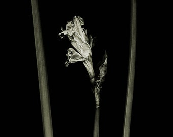 botannica obscura 8...botanical fine art photography by kelly angard