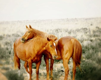 Horse photograph, dreamy horse photography - wild horses photo, rustic landscape, nature - love, couple, romance