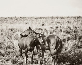 Horse Photography - black and white horse photograph, 8x8 two wild horses photo - love, couple, romance