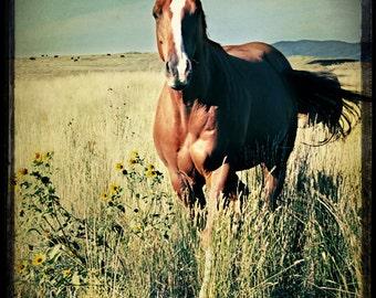 Horse Photography, horse photograph - 8x8 horse fine art, portrait photo, landscape, nature print