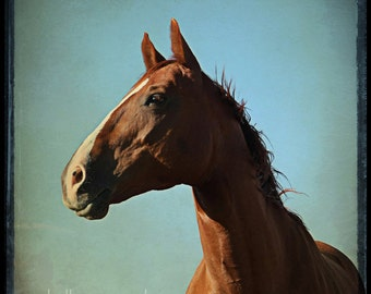 Horse art, horse photograph - 8x8 horse photography, horse photo, art print - war horse portrait