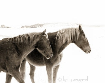Horse Photograph - black and white horse photography - 8x10 two winter horses, snow landscape - love, couple together