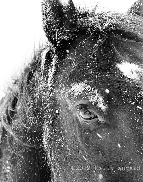 Horse Photograph - black and white horse photography - 8x10 horse photo, winter horses, snow landscape - nature, snowflake