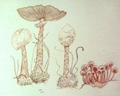 Mushrooms in Color