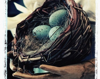 Fine Art Photography Still Life Photo Eggs Nest Home Decor Blue Eggs Archival Print Gift Under 50 Polaroid Transfer