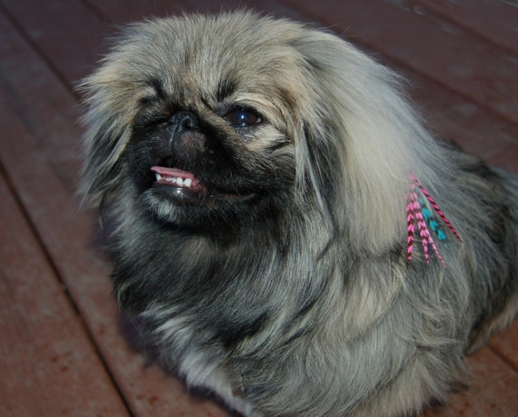 Pet Rainbow 5 Feather Hair Extension:  FREE mirco link clamp